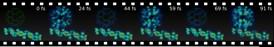 Movies of Quantum Transfer 49585