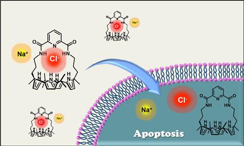 U of T Cancer Molecule id36877