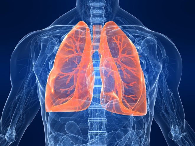 1-Lungs