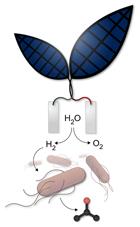 Harvad Bio Leaf_02_15_140-bionic-leaf