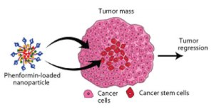 Phenformin Nano Cancer Delivery id39449