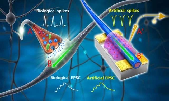 Bio Synapsis 5768059a6d266