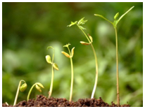 tenka-growing-plants-082616-picture1