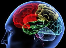 brain-quantum-1-download