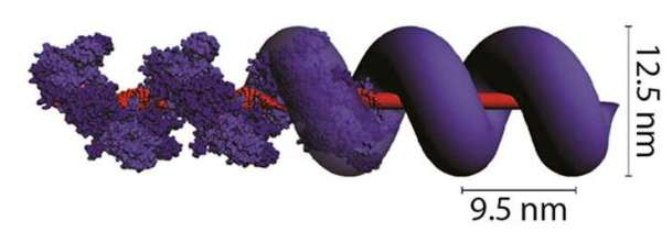 DNA proteinrebar