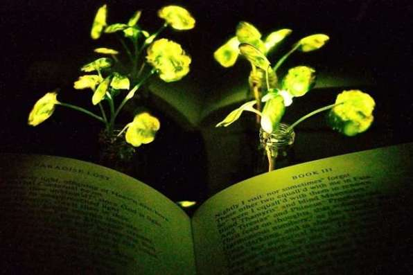 Plant Glow 4-engineerscre
