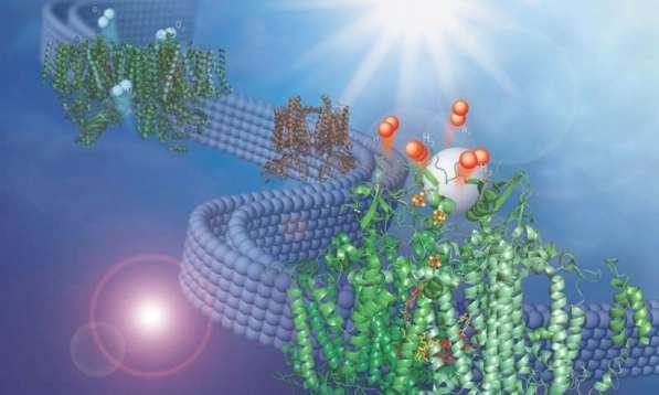 hydrogen membrane discoveryada